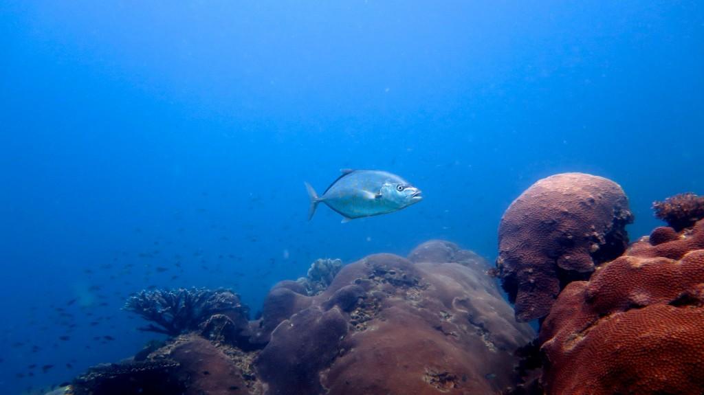 Koh Tao, Plongée sous-marine, Fonds marins