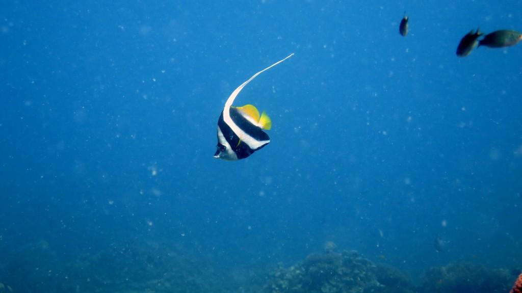 Koh Tao, Plongée sous-marine